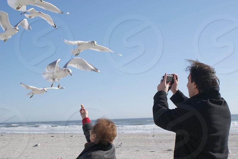 photographer camera beach seagulls photo