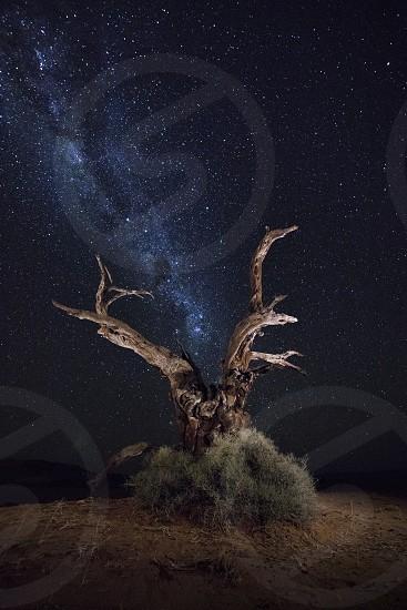 Milky Way stars Astrophotography Botswana Tree Baobab light painting night midnight blue Africa constellation evening night arid Namibia camel thorn photo