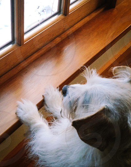Dog puppy cute curiosity wood window windowsill winter snow paws fur photo