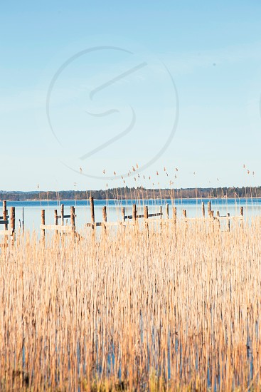 Lake with golden reeds photo