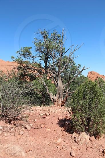 Trees GOG 389 photo