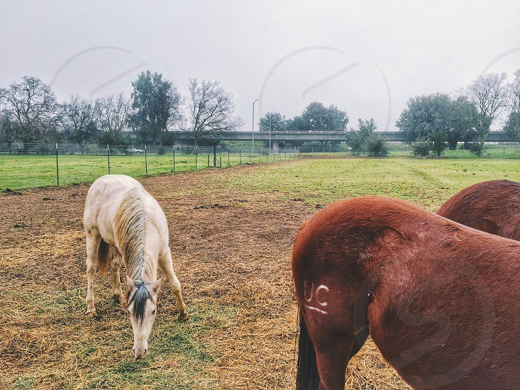 1 white horse near 2 brown horse in ranch during daytime photo