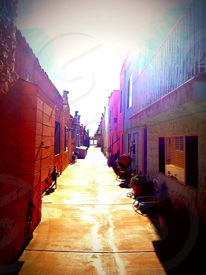 Sunny color  photo