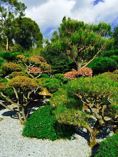 Japanese Garden  photo