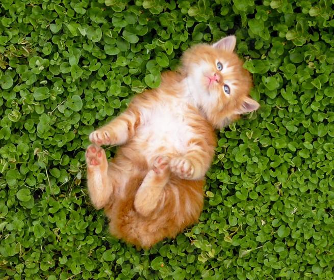 Tiny red kitten outdoors portrait. photo
