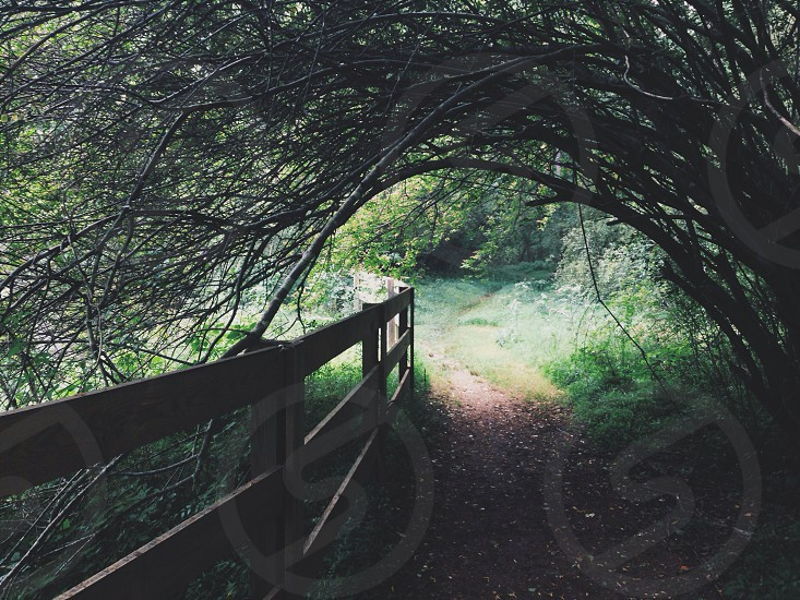 Covered path photo