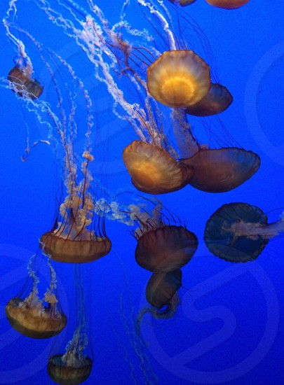 Tropical ocean fish peaceful blue jellies jellyfish still vacation beach sand nature photo
