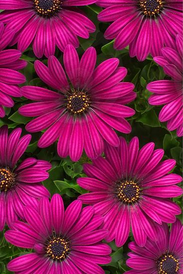 purple flowering plant photo