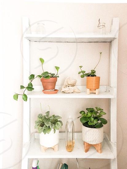 Plants home decor bedroom  photo