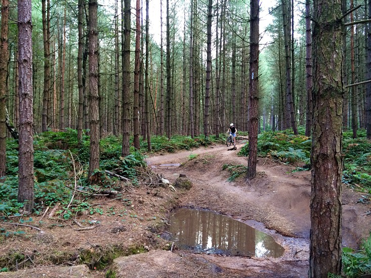 Sherwood pines forest  photo