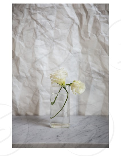 two white flowers in a glass vase of water on a marble counter with white paper wall photo