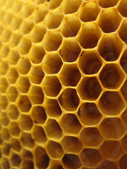 Honeycomb nature macro photo