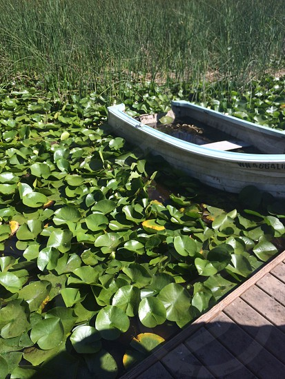 Rowboat in lily pads photo