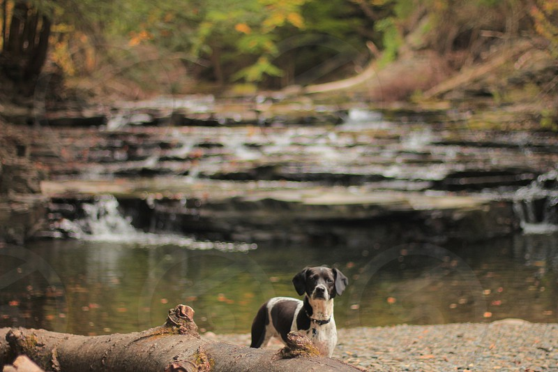 black and white hound dog by a pond photo