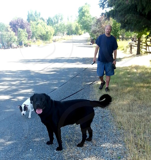 Middle aged man happlly and walking two dogs down a country road photo