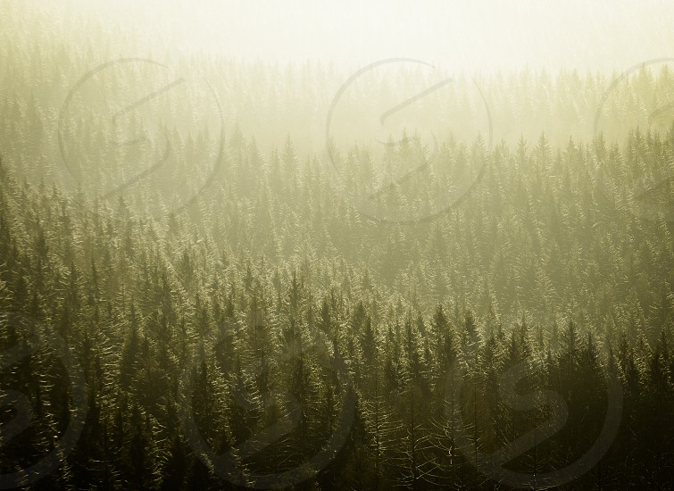 Wald Walden Forest Green january nee years day Outdoor Hinterland Travel nature landscape  photo