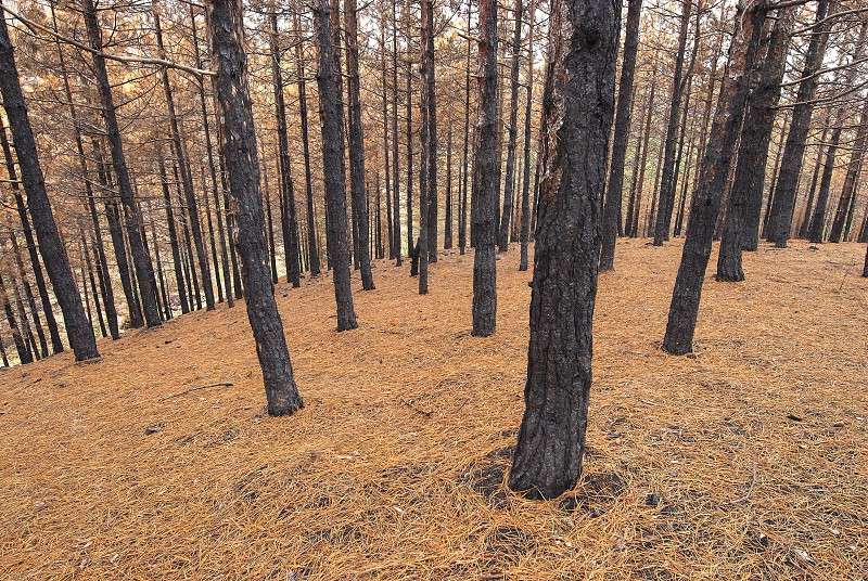 Burned forest photo