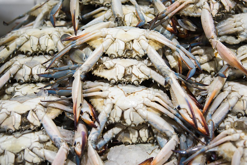 Fresh blue crab for sale at the modern fish market located in Dubai photo