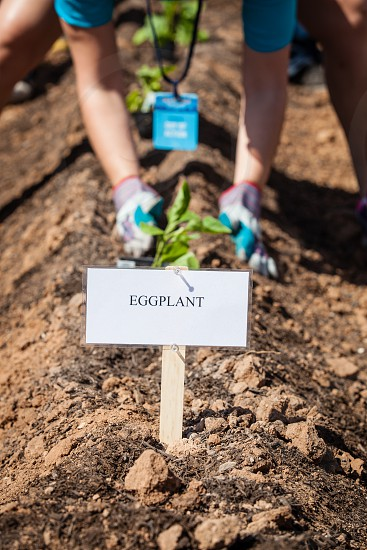 Working to plant a vegetable garden. photo