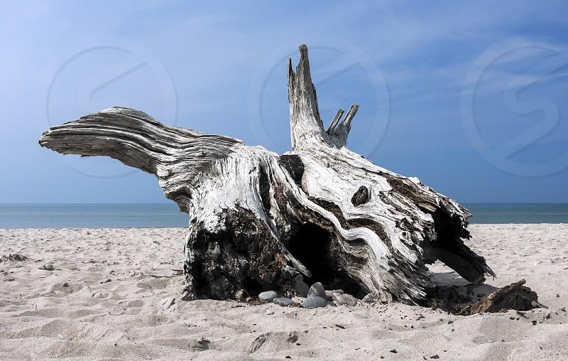 landscape nature beach wood wood drift wilderness sea ocean photo