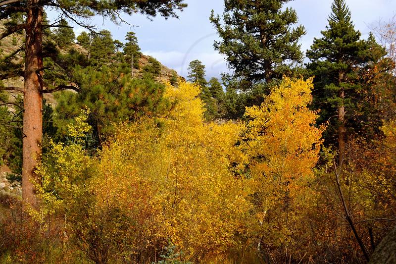 Rocky Mountain National Park - Estes Park Colorado - USA photo