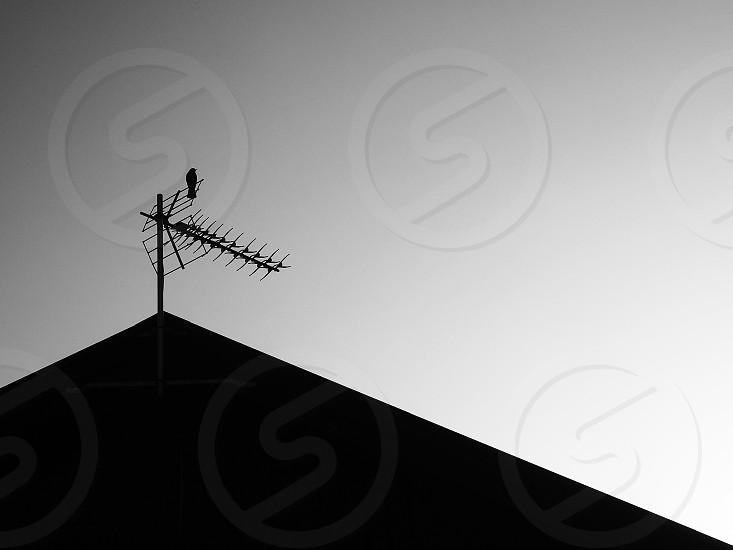 television antenna photo