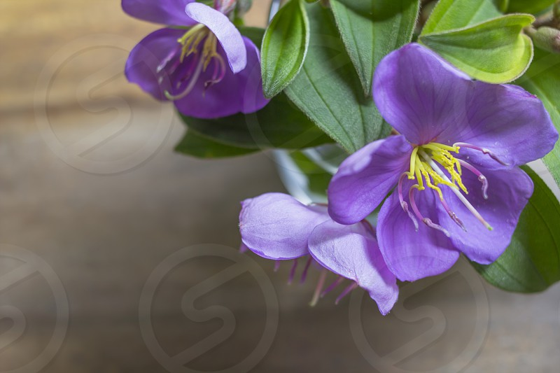 bouquet of violet flowers photo