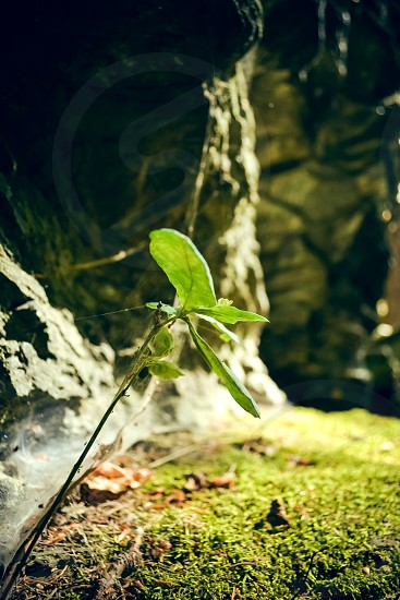 Growth in nature photo