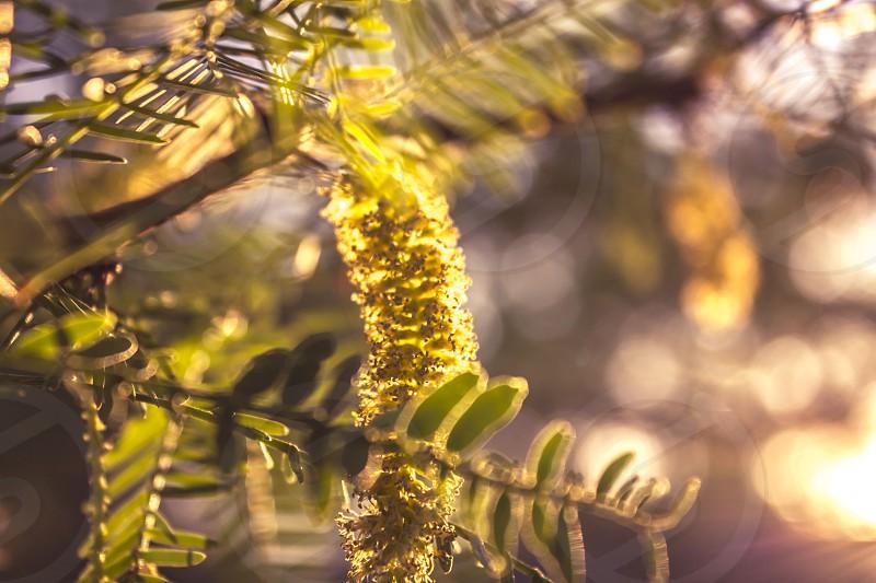 green fern leaf photo