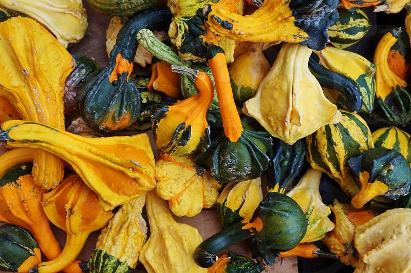 gourd squash decorative colorful halloween thanksgiving indian summer autumn fall photo