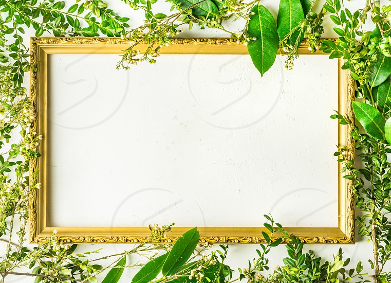 Flat lay with green plants on a white background photo