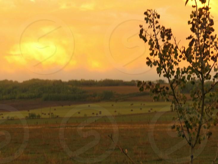 farm dusk cattle fields fences autumn sunset landscape photo