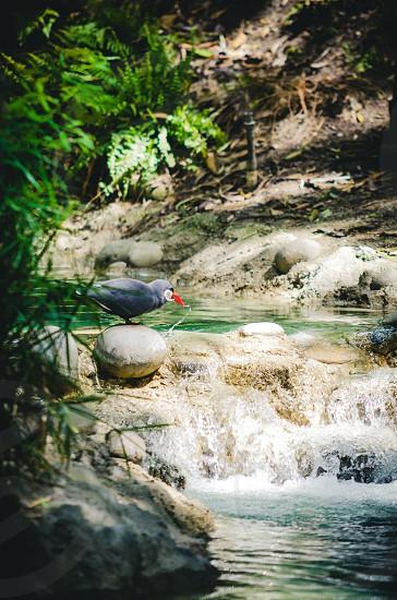 Tropical Bird Wildlife Stream  photo