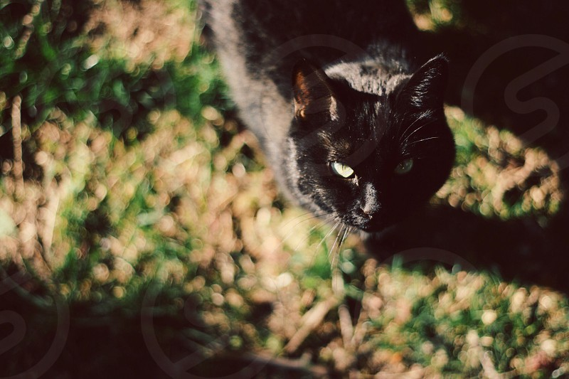 black cat photo