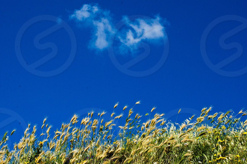 green grass and blue blue sky photo