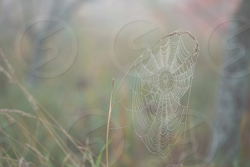 Dew covered spider web on a foggy morning photo