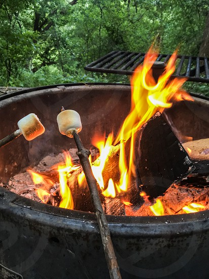 Toasting marshmallows at a campfire  photo