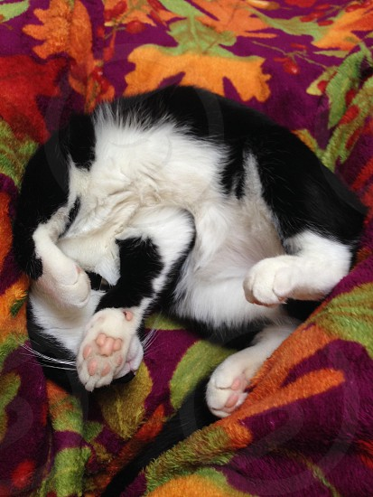 tuxedo cat lying on multicolored floral bed photo