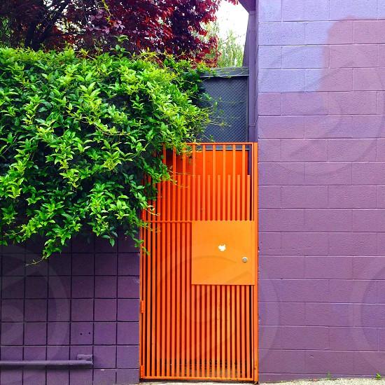 Orange door in purple wall with greenery.  photo