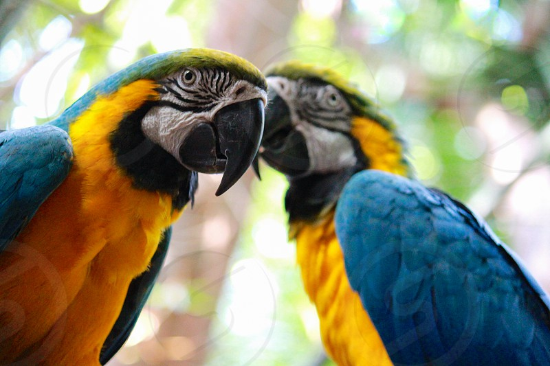 blue and gold macaw focus lens photography photo