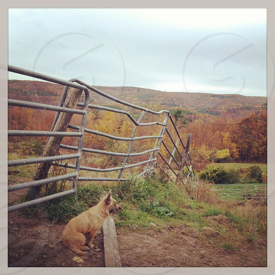 A puppy on his farm on a fall day in New York photo