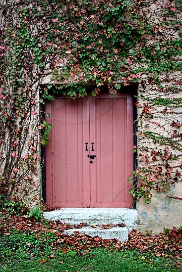 Pink door is surrounded by color changing vines for the Fall photo