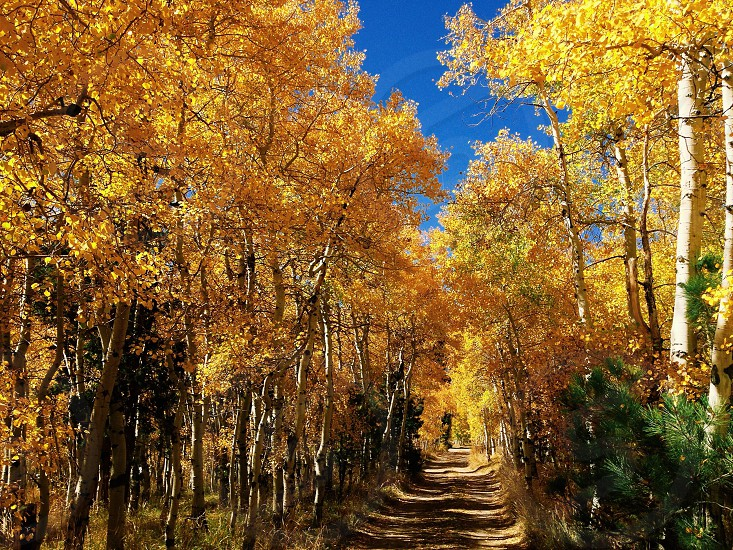 Yellow tree lined road photo
