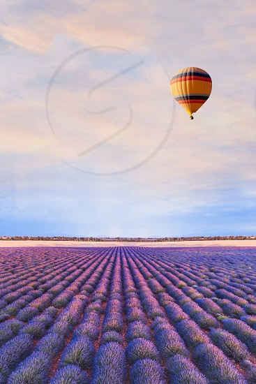 travel destination beautiful dream inspirational landscape with hot air balloon flying above lavender fields in Provence tourism in France photo