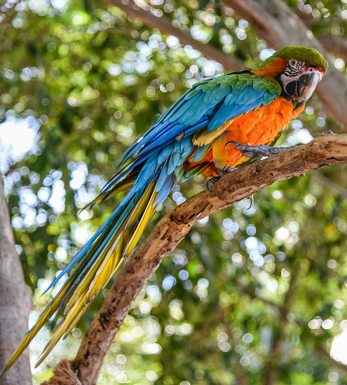 blue green and orange macaw on tree during daytime photo