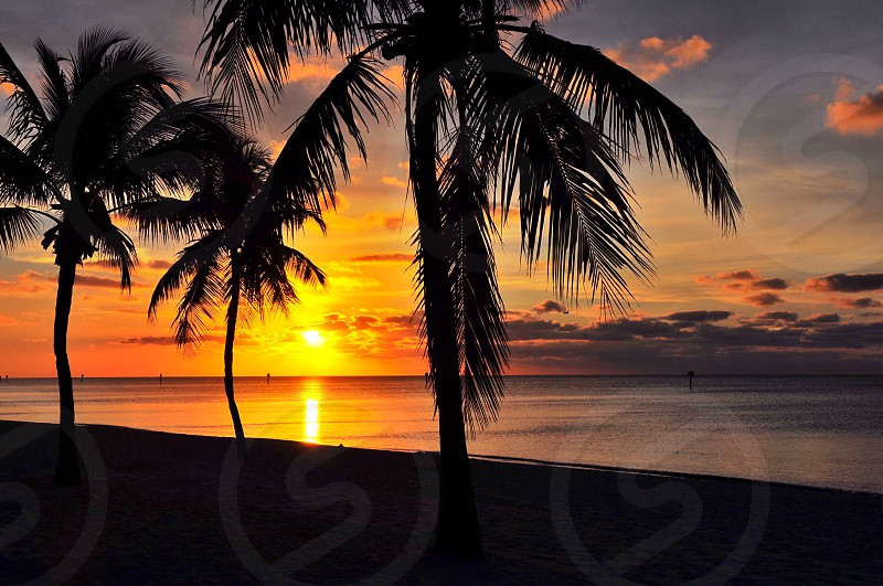 silhouette of palm tree during sunset photo