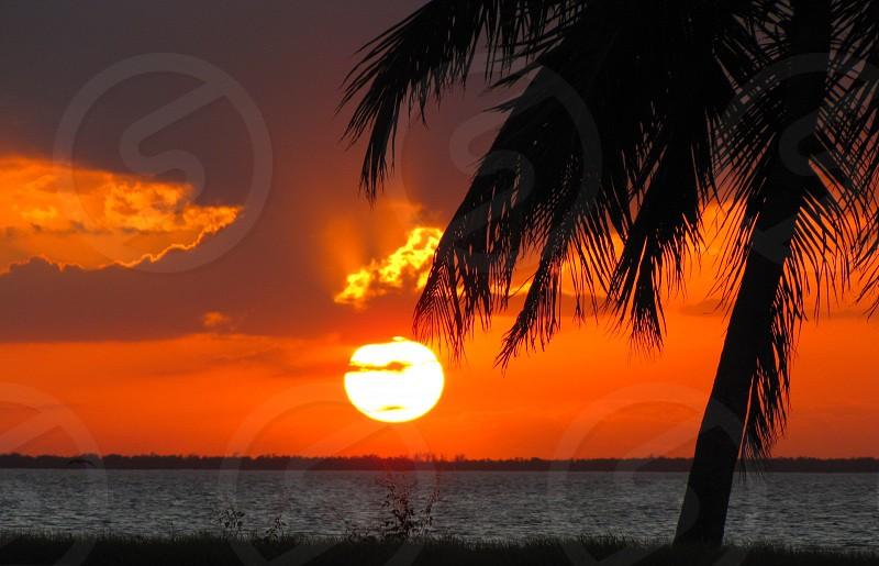 Florida sunset beach tropical sky palm tree tree sun sand shadow photo