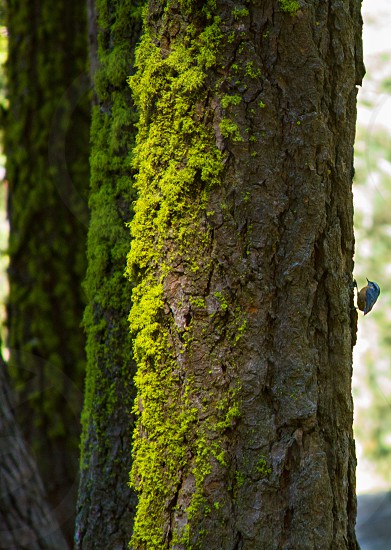 Trees Green Moss Bird. photo
