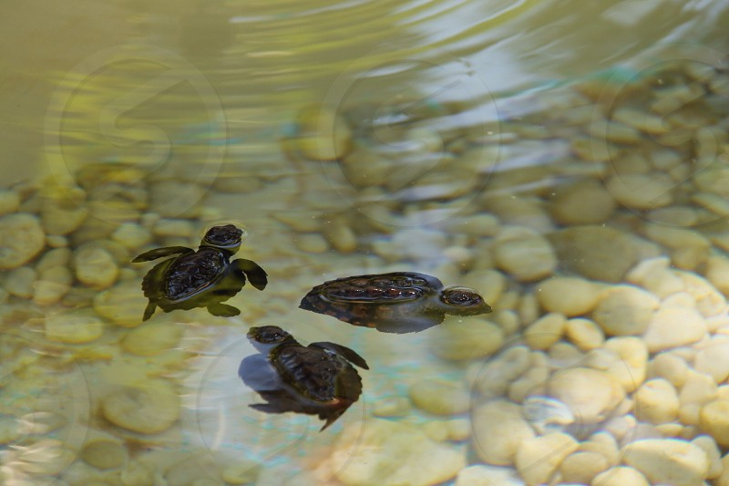 brown turtles photo