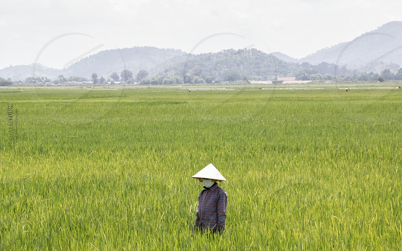 Rice Fields Vietnam www.msturmphoto.com  photo